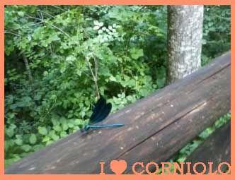 I love #Corniolo Giardino Botanico di Valbonella  … è stato impossibile non rimanere incantati alla vista di una #libellula blu posatasi vicino a noi.
