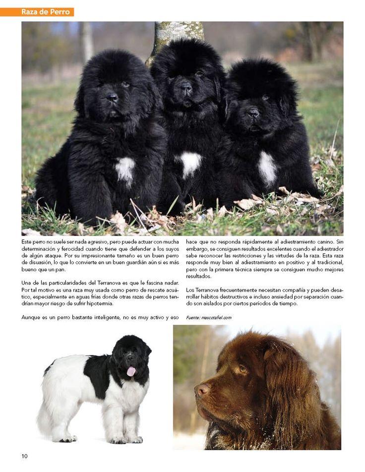 Raza de Perro: Terranova   Edición Nov-Dic 2016.   Sección patrocinada por Greenies en Melo Pet & Garden.  #PetsWorldMagazine #RevistaDeMascotas #Panama #Mascotas #MascotasPanama #MascotasPty #PetsMagazine #FolowMe #Terranova