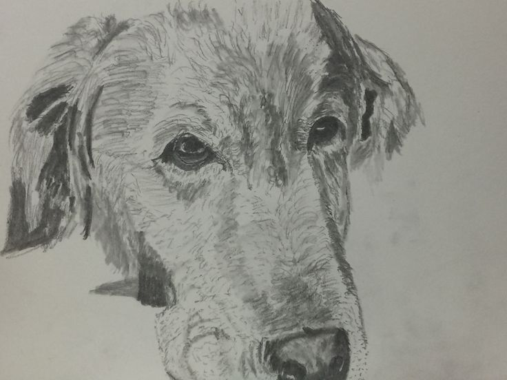 a very quick sketch of my puppy again...