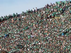 Sea of Green!