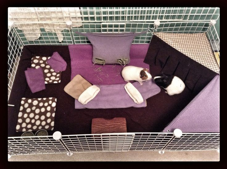Superbe Homemade Hedgehog Cages | And C Cage Fleece Decorating Idea: Different  Shades Of Purple