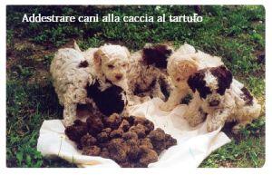 Cani da tartufo   I tartufi sono un ottimo e ricco piatto, un tubero utilizzato in cucina sia consumato cotto che crudo, utile per insaporire molte pietanze. Troviamo tartufi bianchi e tartufi