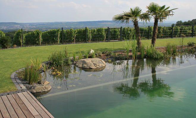 Naturpool Naturpool In 2020 Outdoor Water Pool