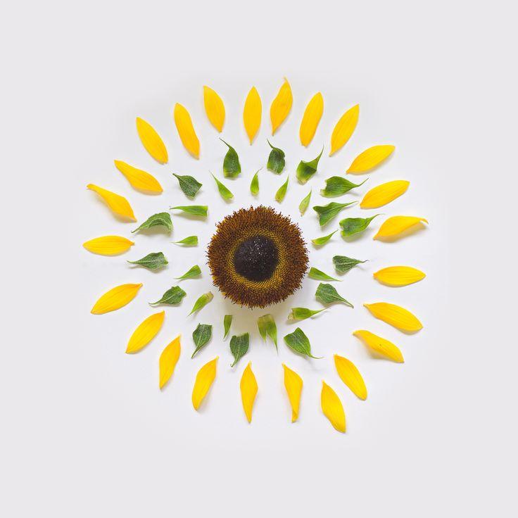 Flores Explodidas   Comunicadores