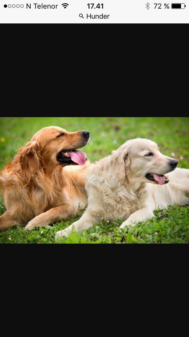 Hunder er så søte!