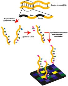 Whole Exome Sequencing ... Wiki