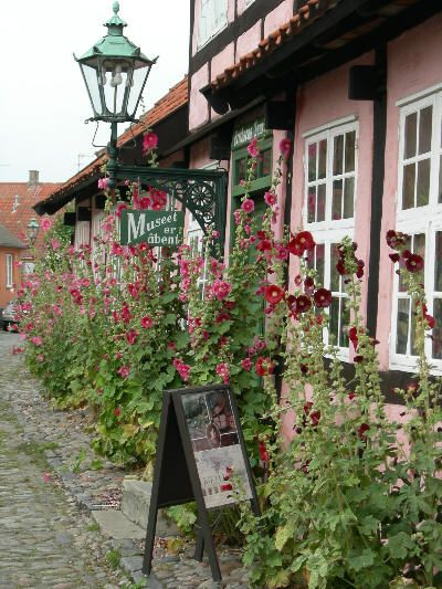 De utrolig smukke og charmerende bindingsværkshuse med stokroser, meget Bornholmsk :-)