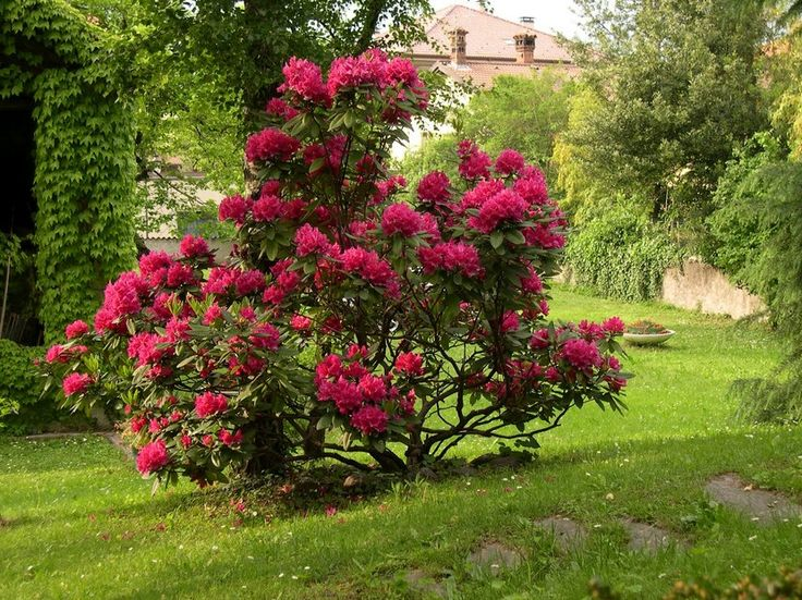 arbustos para disfrutar en invierno m s ideas sobre