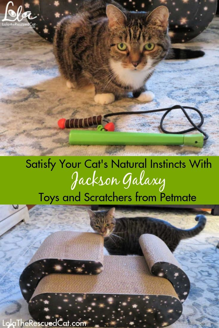 Support Your Cat S Natural Instincts With Jackson Galaxy Toys From Petmate And A Giveaway Pet Mat Cats Jackson Galaxy
