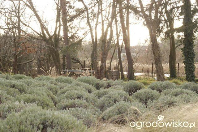 Ogród tworzę nowoczesny czyli wewnętrzna walka jak nie zostać kokoszką :) - strona 2132 - Forum ogrodnicze - Ogrodowisko