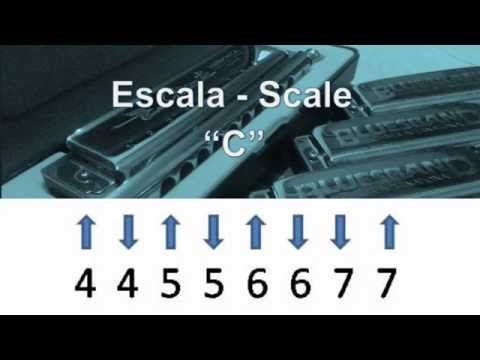 How to Play Diatonic Harmonica - Scale and Exercises - Armonica Diatonica - Escala - YouTube