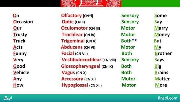 Image result for cranial nerves mnemonic - <3 - Tenizen - Finspi.com