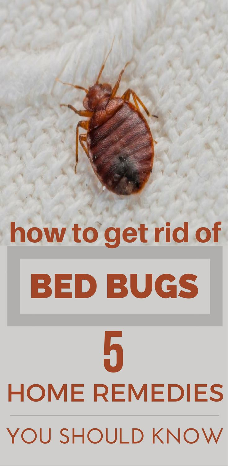 11 best bed bugs treatment images on pinterest bed bugs treatment