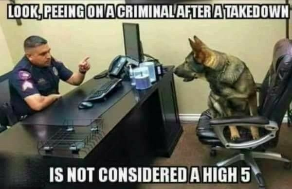 Dog Meme Funny Dogs Police Dogs Military Working Dogs