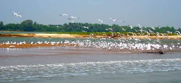Chilka Lake is a brackish water lagoon, spread over the Puri, Khurda and Ganjam districts of Odisha state on the east coast of India, covering an area of over 1,100 km2. It is the largest coastal lagoon in India and the second largest lagoon in the World.