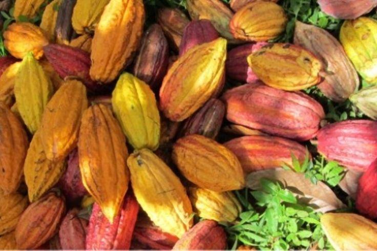 Ignore Cocoa Price Propaganda Against Nana Addo  Minority