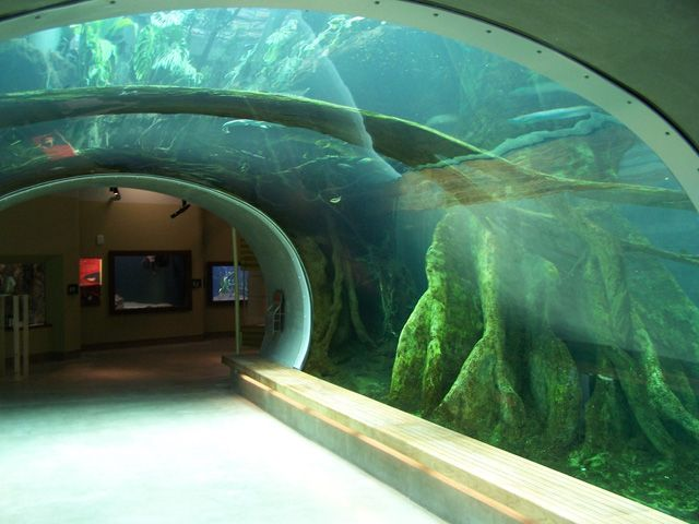 66 best fish tanks made by atm images on pinterest fish for Pool show on animal planet