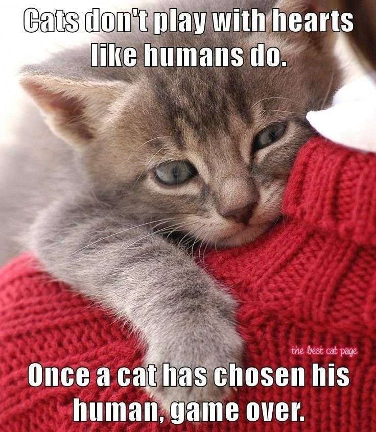 Once a cat has chosen his human... GAME OVER!