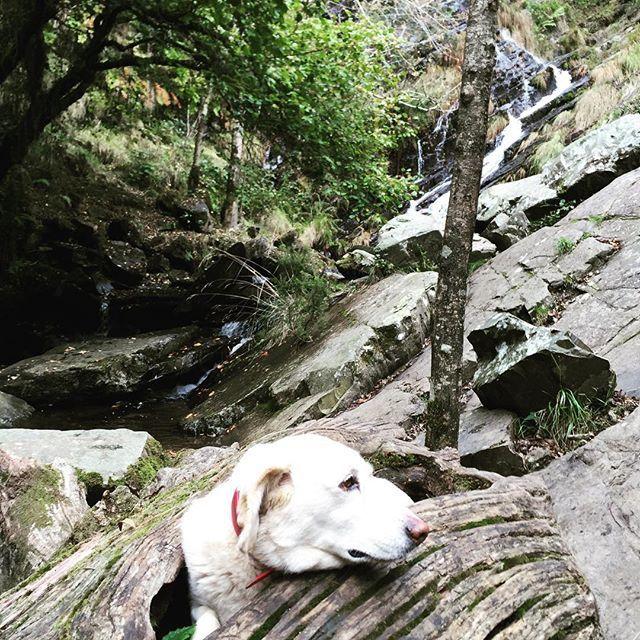 """#asturias #santaeulaliadeoscos #rutaseimeira #cascada #waterfall #landscape #dogs #trees"" Photo taken by @mltorresl on Instagram, pinned via the InstaPin iOS App! http://www.instapinapp.com (10/18/2015)"