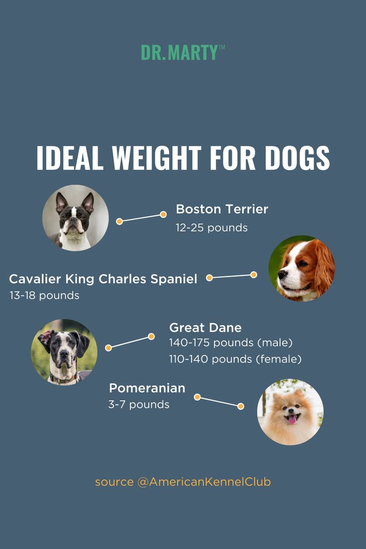How much should my dog weigh is my dog overweight in 2020