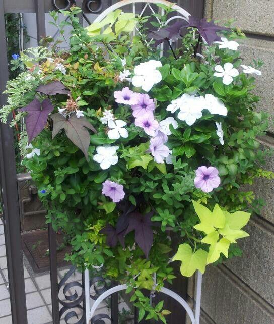 Hanging Flower in Summer  2013