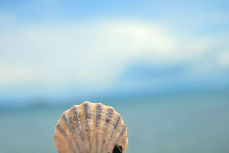 #Shell #sea #seashell #denizkabuğu ⚓️☀️