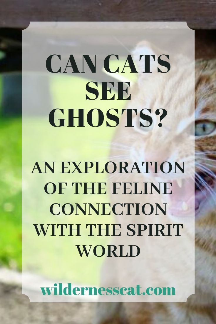 Can Cats See Ghosts Wildernesscat Can Cats See Ghosts Cats What Cats Can Eat