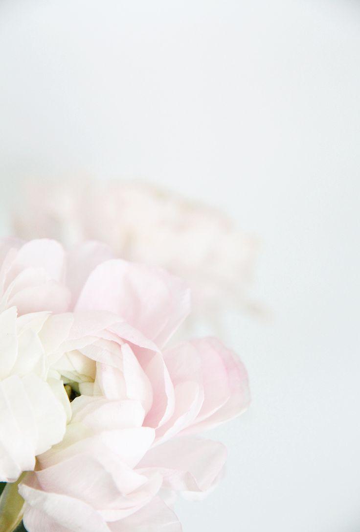 Flowers at Hunaja