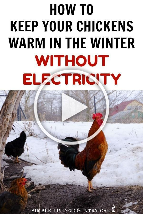 Think you need a heat lamp in your chicken coop in order ...