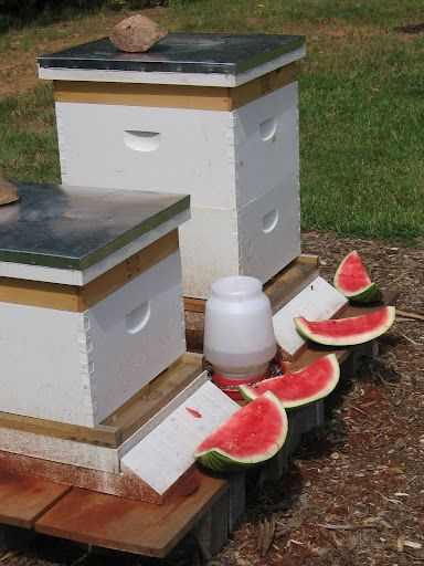 Bee Treat = the bees hang out with my chicken and peafowl. They will all enjoy this...
