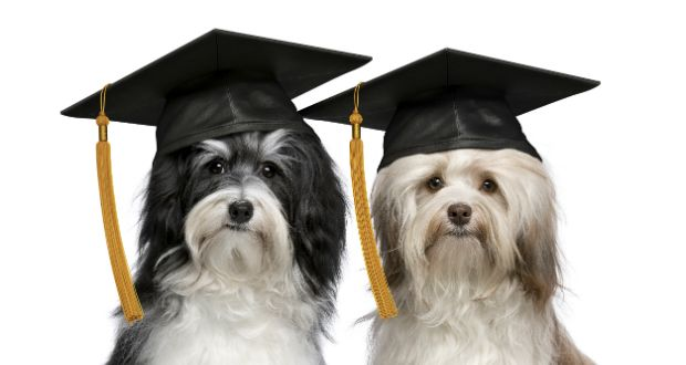 Puppy Lover News - Helpful information about your canine companion