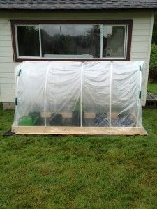 PolyTunnel Tutorial. Full instructions on how to build a small greenhouse with roll-up side panel for under fifty bucks. Inside, blogger is container growing tomatoes in a combination of 5-gallon buckets and hydroponic grow bags.