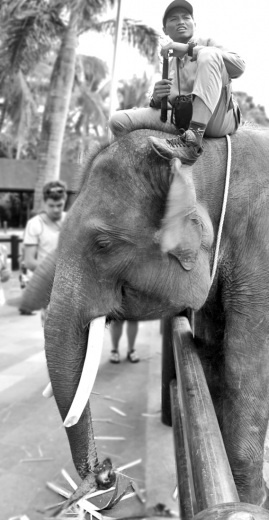 Elephants. I will always love them. Photography by @amandamgrove
