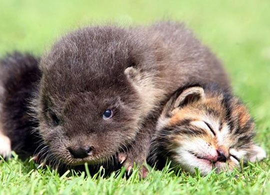 Completely And Utterly Adorable - cat & otter friends....