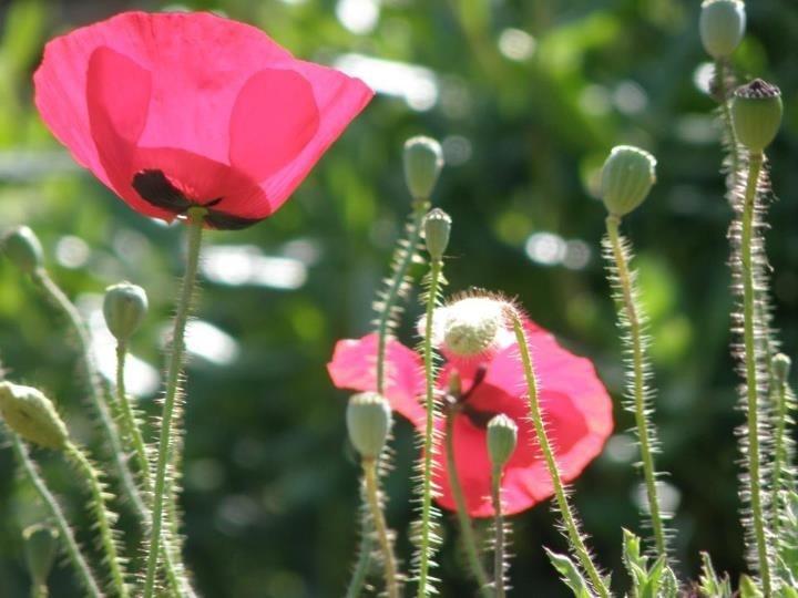 my photo, #spring #greekplants