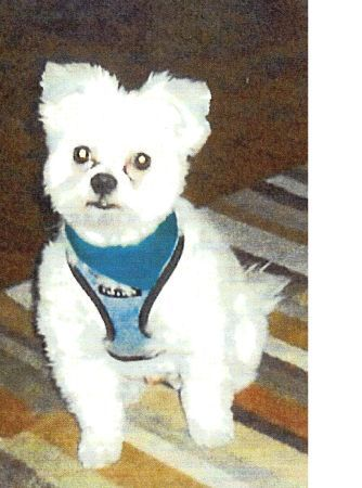 I know someone out there Saw JASPER IS IN THE BUSHWICK AREA PLEASE HELP ME REWA (Brooklyn)  Evergreen Ave at Linden St Someone in the bushwick area in brooklyn has my dog JASPER ON LINDEN STREET AND EVERGREEN AVE... I NEED YOUR HELP. JASPER IS A ALL WHITE MALTESE..HE NEEDED HIS MEDICATION JASPER HAS NOT HAD HIS MEDICATION SINCE 3/19/2012.......... PLEASE PLEASE PLEASE HELP ME FIND JASPER... SOMEONE SAW JASPER ON THURSDAY ...516-983-7417 xfbbt-4476001548@comm.craigslist.org