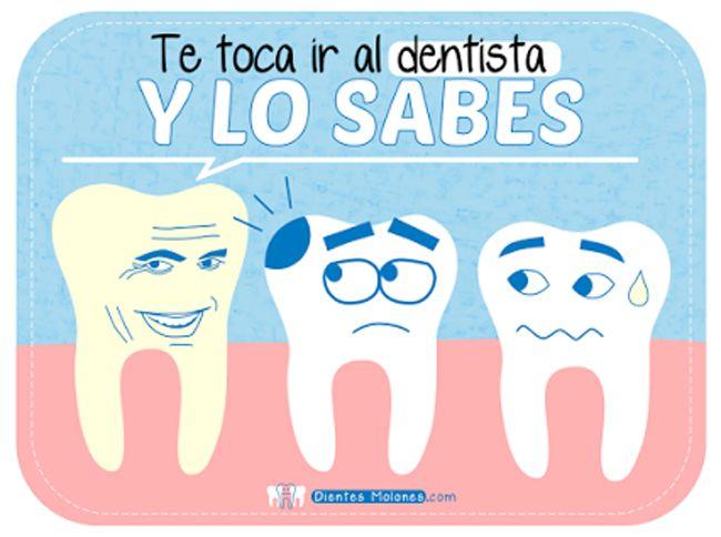 ¿Cuáles son las fases y el tratamiento de una endodoncia multirradicular?