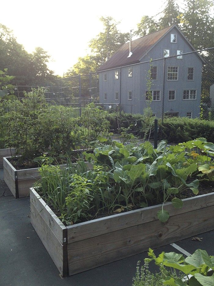 Tennis Court Adapted Into A Kitchen Garden Of Raised Beds   Clever  Upcycling!