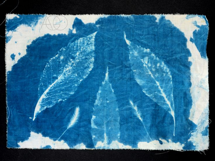 #cyanotype #blueprint #sunprint
