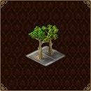 Gardens of Time : +1 Sycomore feuillu