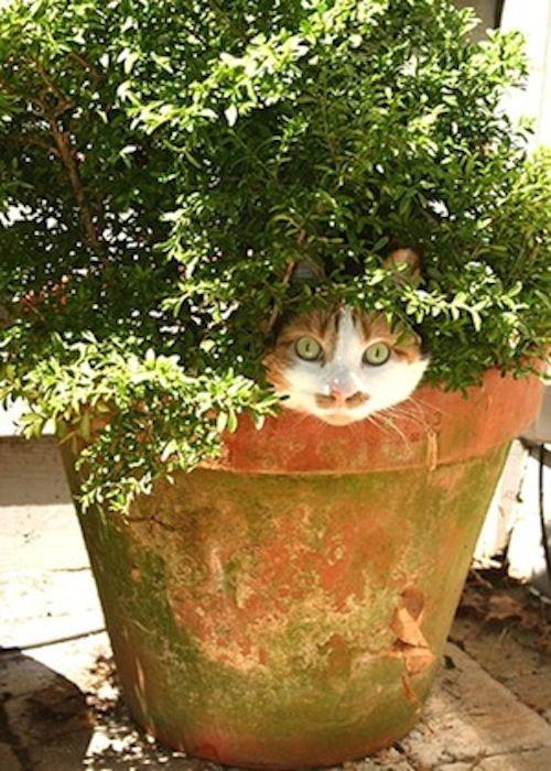 Cat Tree in Bloom.