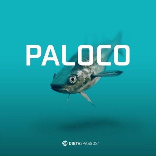 O Paloco-do-Pacífico é um peixe muito similar ao bacalhau, podendo ser encontrado nas costas do Oceano Pacífico Norte, entre o Japão e o Golfo do Alasca. Este é um peixe de elevada qualidade conseguindo ser mais económico comparativamente com o...