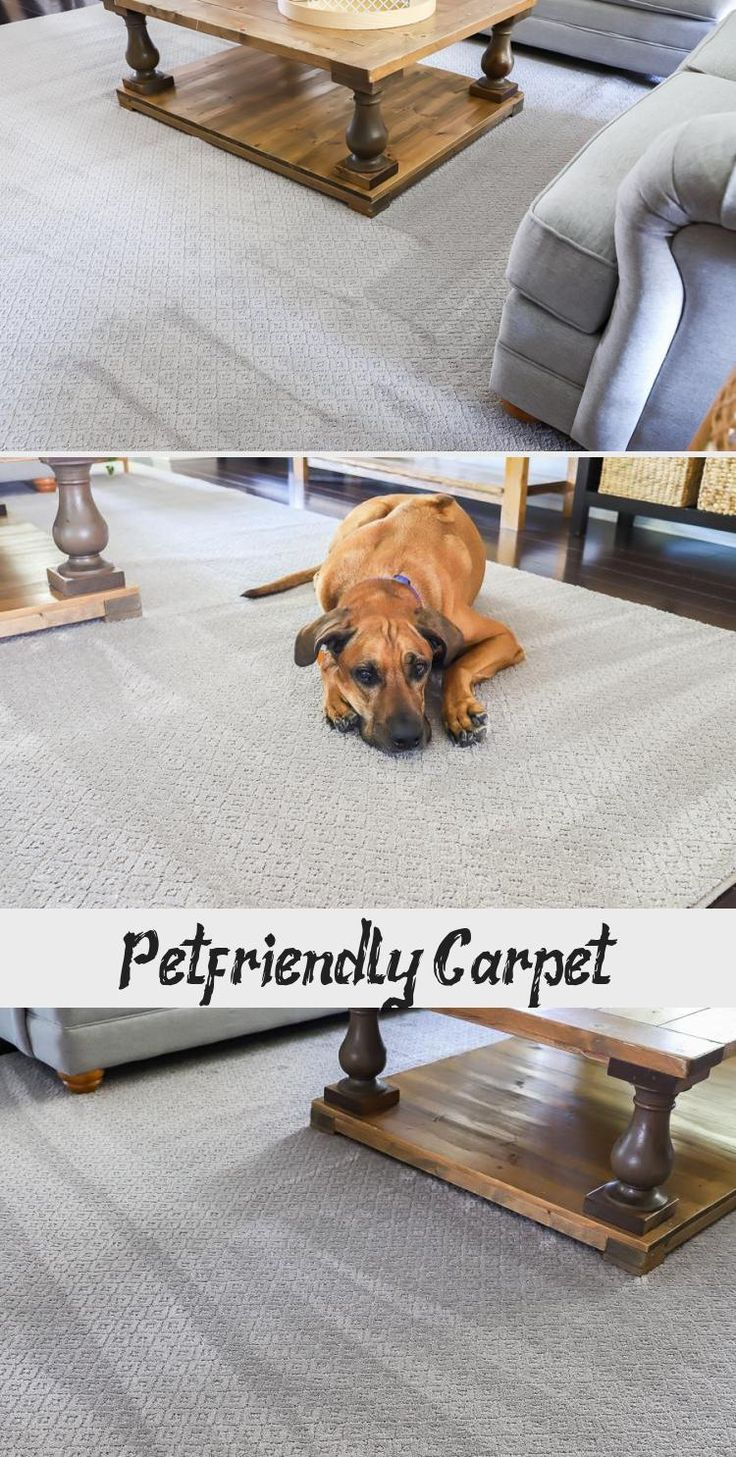 May 21 2018 petfriendly carpet this post is sponsored