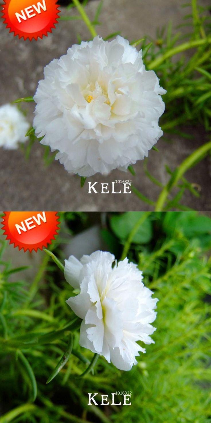 [Visit to Buy] Time-Limit!!200 Seeds/lot White Portulaca Seed Flower Garden Potted Bonsai Plants Flower Purslane Seeds Scutellaria Barbata,#UZY #Advertisement