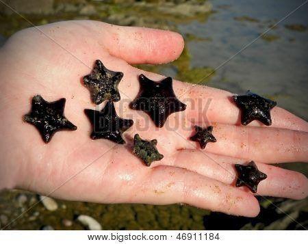 Handful of Cushion Starfish