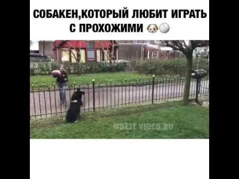 Кинь мячик!