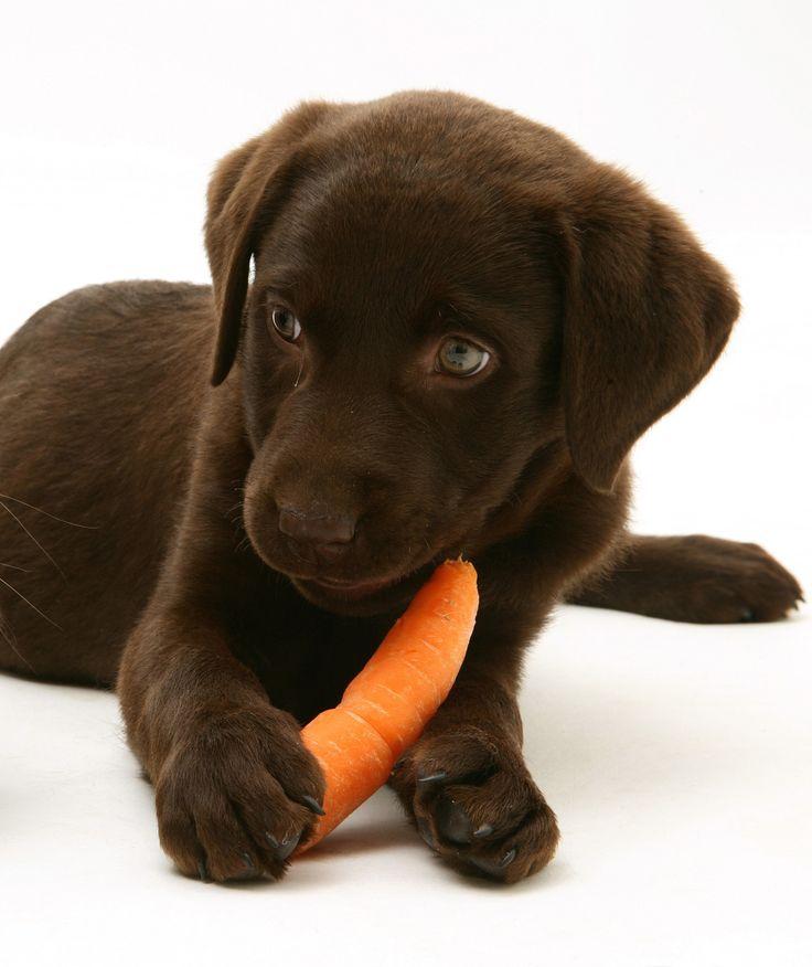 Best Treats for Dogs | PawNation - PawNation
