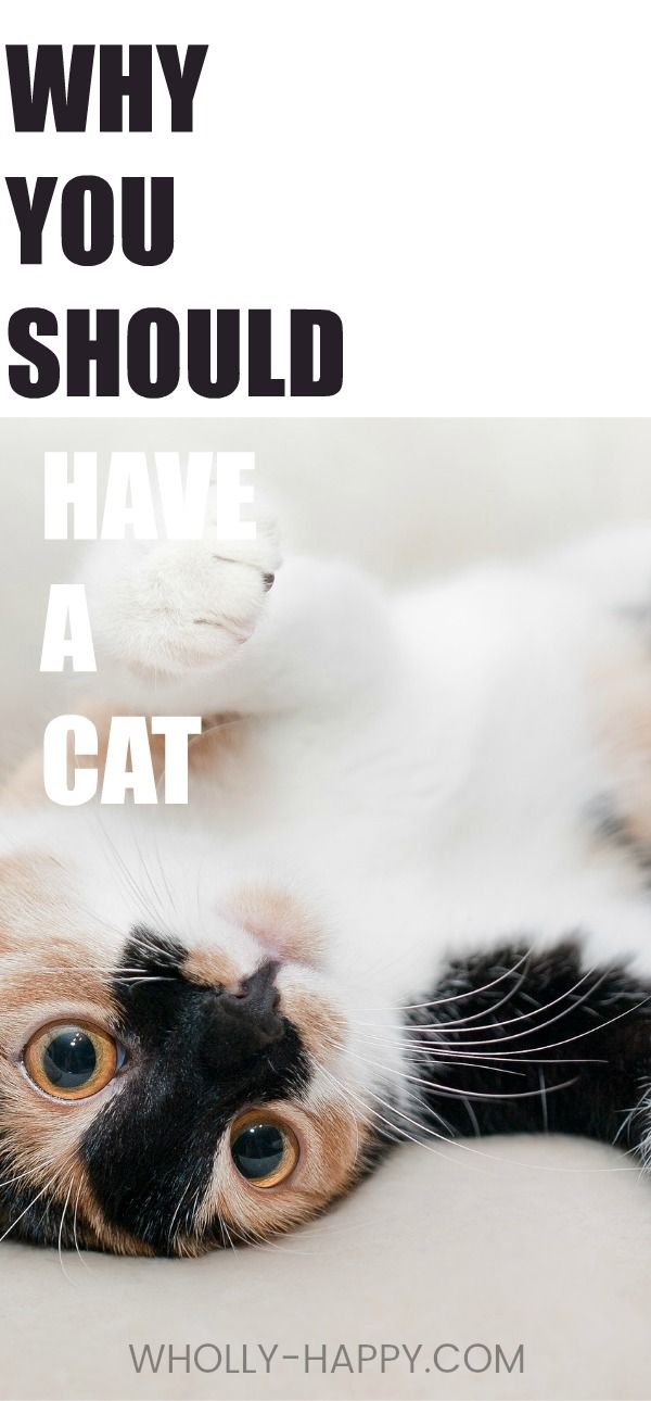 Why having a cat is good for your health