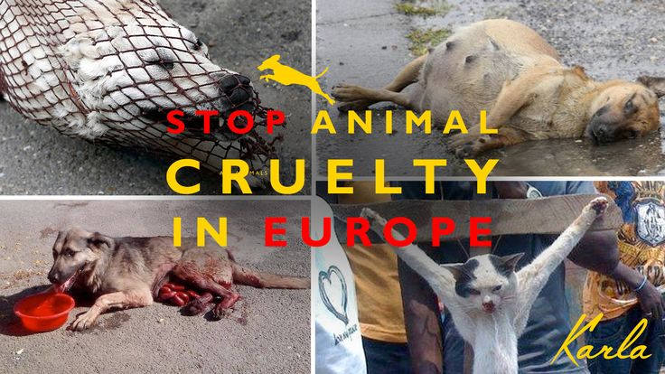 Law against animal cruelty in all European countries