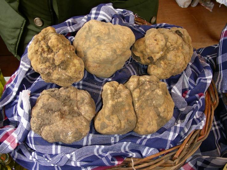 I tartufi di Sant'Agata Feltria. Truffles from Sant'Agata Feltria